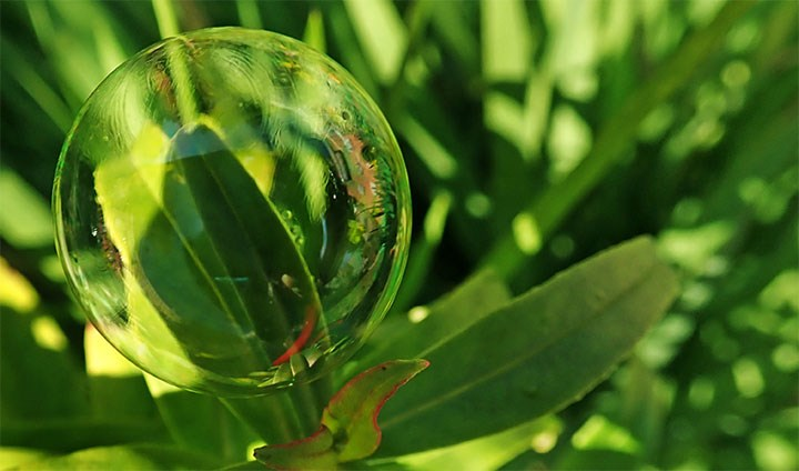 Picture showing a bubble in front of a plant.