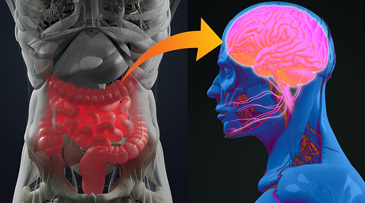 Nutrition-Gut-Brain Interaction