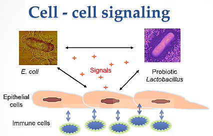 Picture of cell - cell signaling