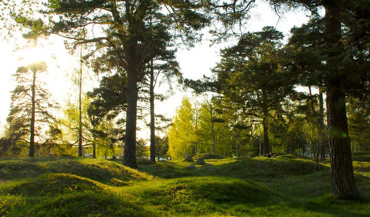 Bild på skogsdunge